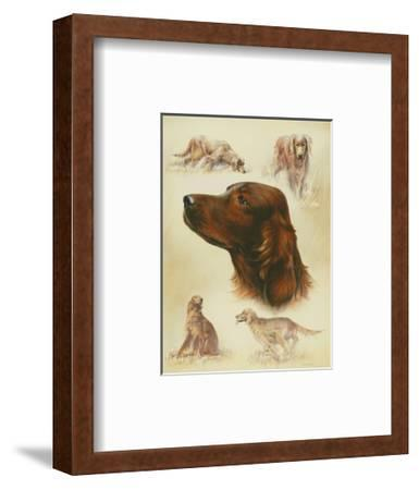 Irish Setter-Libero Patrignani-Framed Art Print