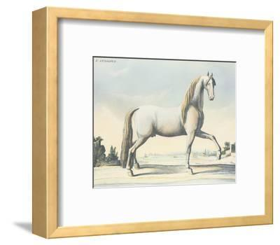 Horse L'Andaloux--Framed Art Print