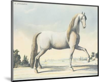 Horse L'Andaloux--Mounted Art Print