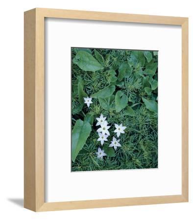 Camas Flowers-Danny Burk-Framed Art Print
