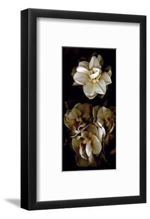 White Flowers Delight II-Richard Sutton-Framed Art Print