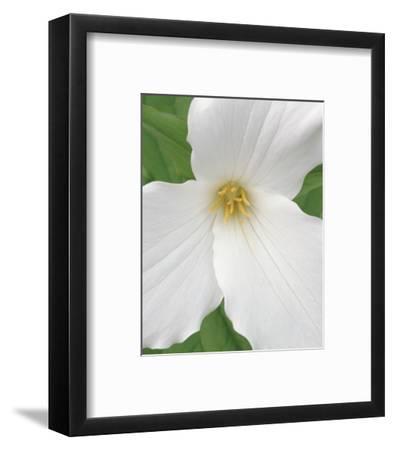 Trillium IX-Danny Burk-Framed Art Print