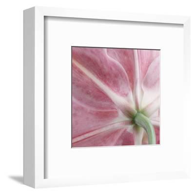 Lily Stargazer 2 Square-Danny Burk-Framed Art Print