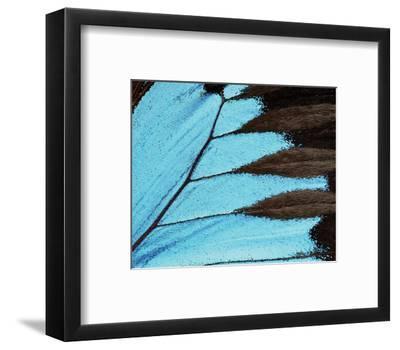 Ulysses-Danny Burk-Framed Art Print