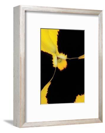 Yellow Pansy-Danny Burk-Framed Art Print