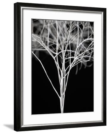 Sonora I-Chris Dunker-Framed Art Print
