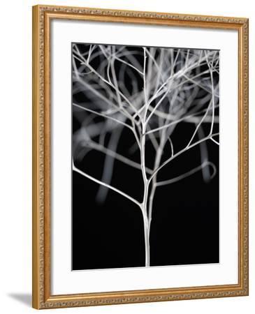 Sonora II-Chris Dunker-Framed Art Print
