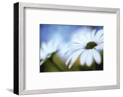 Daisy Blue II-Karin Connolly-Framed Art Print