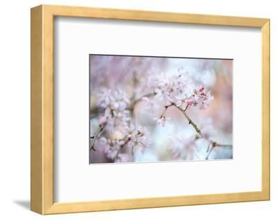 Blooming Beauty-Karin Connolly-Framed Art Print