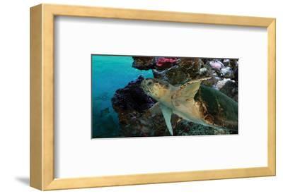 Sea Turtle II-Melinda Bradshaw-Framed Art Print