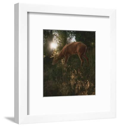 Deer Light-Steve Hunziker-Framed Art Print