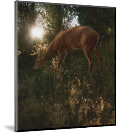 Deer Light-Steve Hunziker-Mounted Art Print