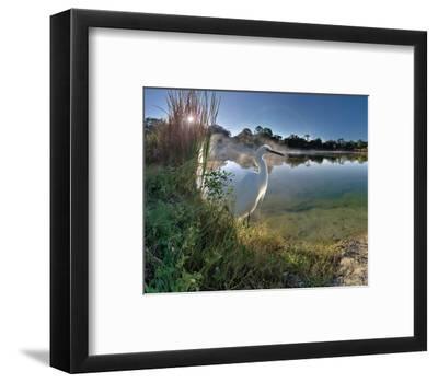 Egret Sunrise-Steve Hunziker-Framed Art Print