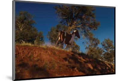 Ridge Runner-Steve Hunziker-Mounted Art Print