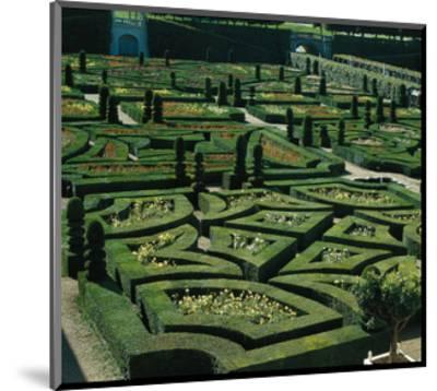 Somptuous Garden III--Mounted Art Print