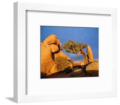 Rocking Tree--Framed Art Print