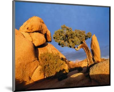 Rocking Tree--Mounted Art Print