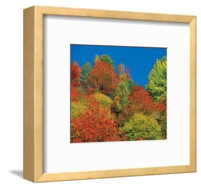 Autumn Tops--Framed Art Print