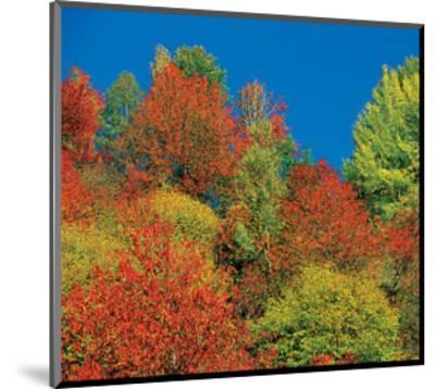 Autumn Tops--Mounted Art Print