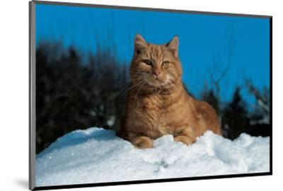 Cat In The Snow--Mounted Art Print