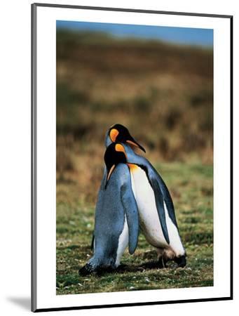Penguins Falling Asleep--Mounted Art Print