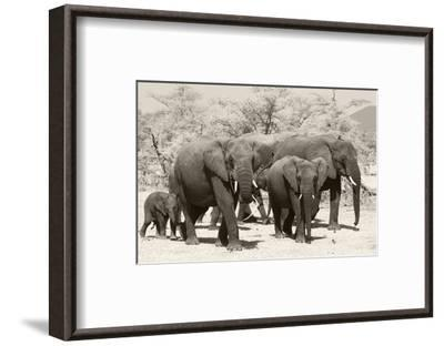 Elephants I-Chris Farrow-Framed Art Print