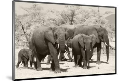 Elephants I-Chris Farrow-Mounted Art Print