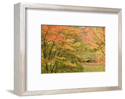 Autumn Colour-Chris Farrow-Framed Art Print