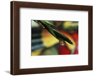 The Harvest-Connie Publicover-Framed Art Print