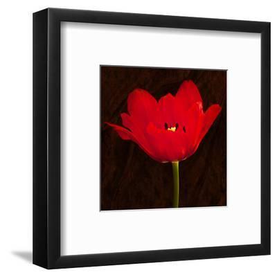 Red Tulip II-Christine Zalewski-Framed Art Print