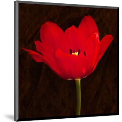 Red Tulip II-Christine Zalewski-Mounted Art Print