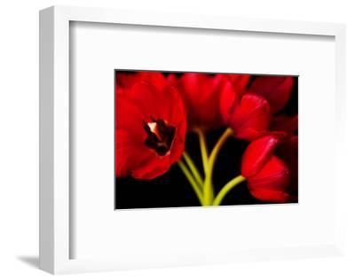 Red Tulips II-Christine Zalewski-Framed Art Print