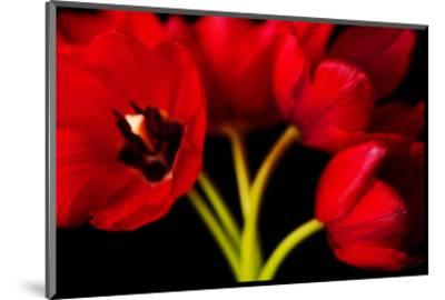Red Tulips II-Christine Zalewski-Mounted Art Print