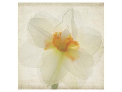 Double Daffodil I-Judy Stalus-Framed Art Print
