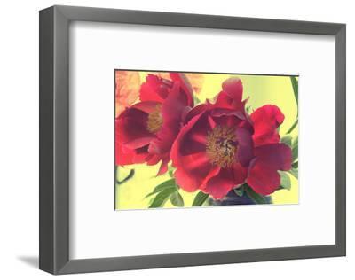 Color my World-Judy Stalus-Framed Art Print