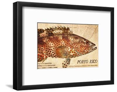 Vintage Color Fish: Porto Rico, US Fish Commission Fish Hawk, 1899-Christine Zalewski-Framed Art Print