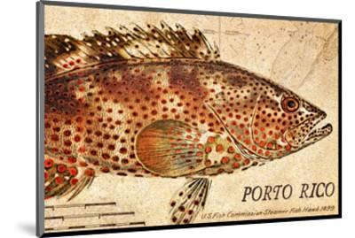 Vintage Color Fish: Porto Rico, US Fish Commission Fish Hawk, 1899-Christine Zalewski-Mounted Art Print