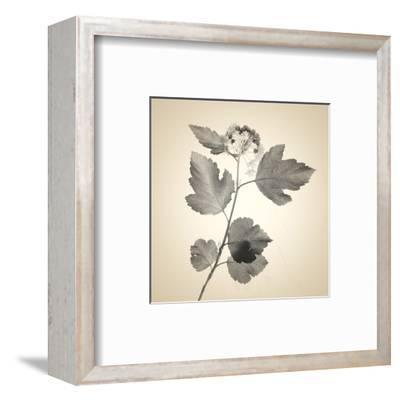 Red Bush-Judy Stalus-Framed Art Print