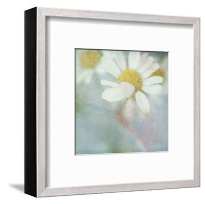 White Daisy I-Judy Stalus-Framed Art Print