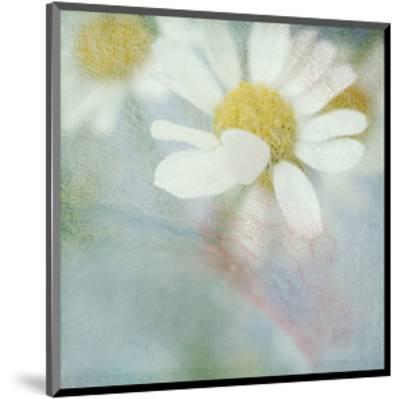 White Daisy I-Judy Stalus-Mounted Art Print
