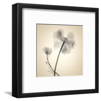 Tulips II-Judy Stalus-Framed Art Print