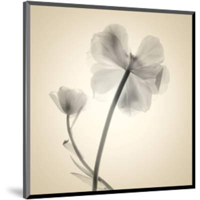 Tulips II-Judy Stalus-Mounted Art Print