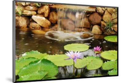 Lilly Pond-Jan Michael Ringlever-Mounted Art Print