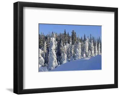 Trees Covered in Snow-Mike Grandmaison-Framed Art Print