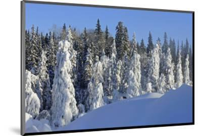 Trees Covered in Snow-Mike Grandmaison-Mounted Art Print