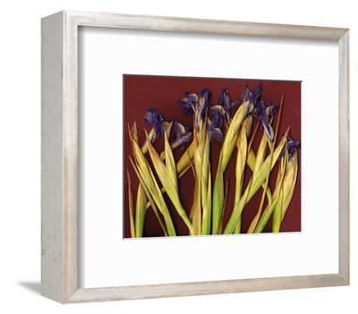 Purple Garden Irises--Framed Art Print