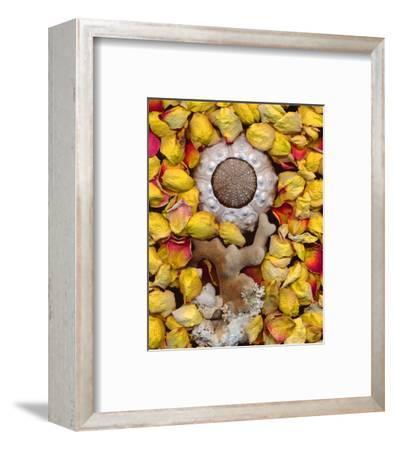 Sea Urchin rose Petals--Framed Art Print