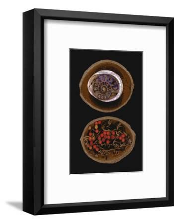 Shell Fossil Ammonite--Framed Art Print