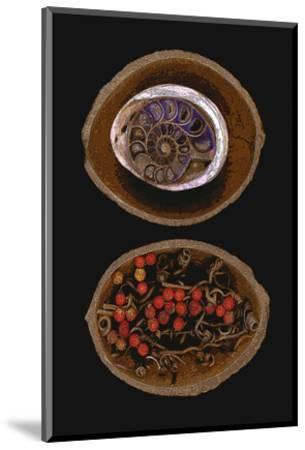 Shell Fossil Ammonite--Mounted Art Print
