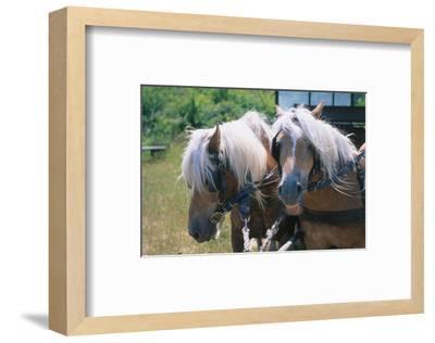 HiddenseeIsland Ruegen Germany--Framed Art Print
